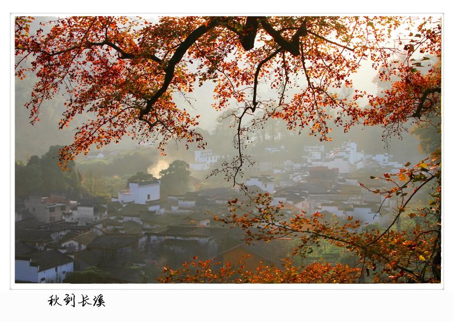 婺源秋季红枫叶拍摄技巧指南